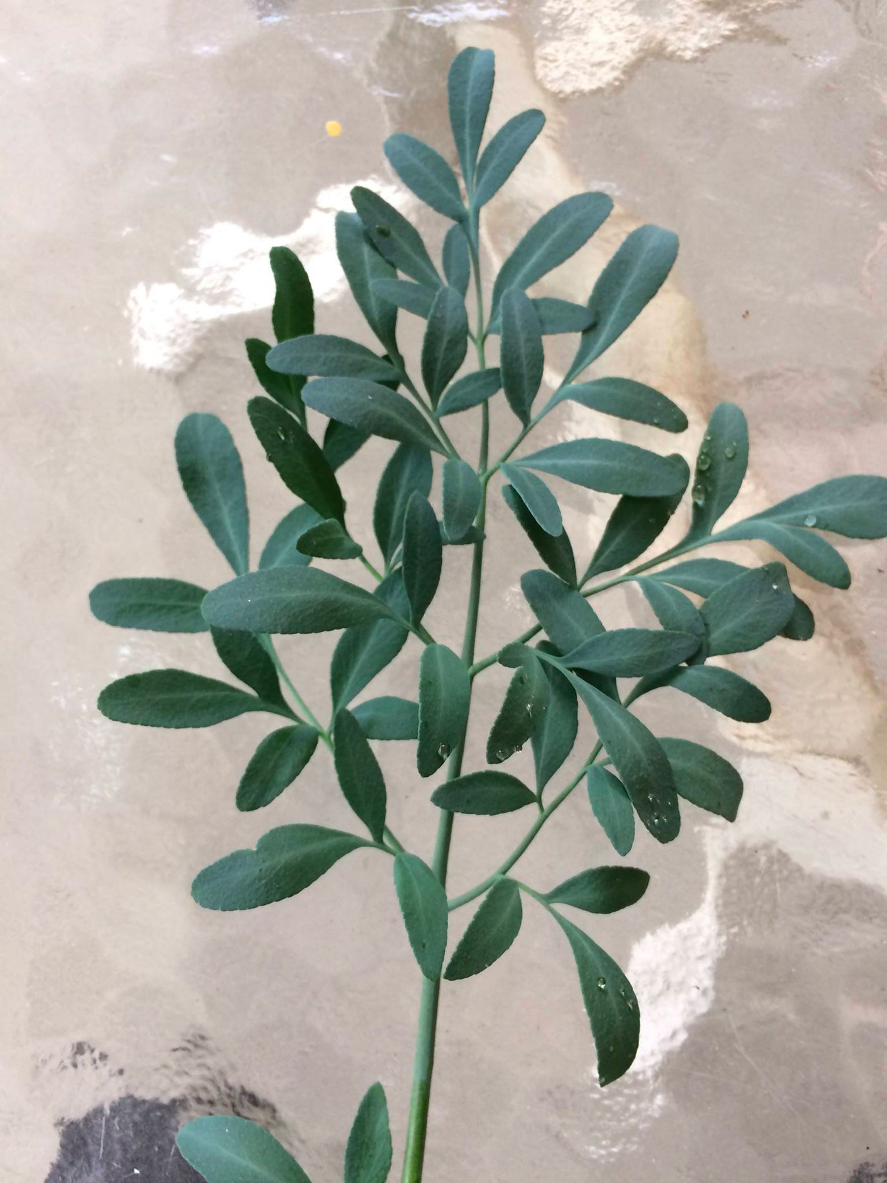 the Tenadam spice plant.