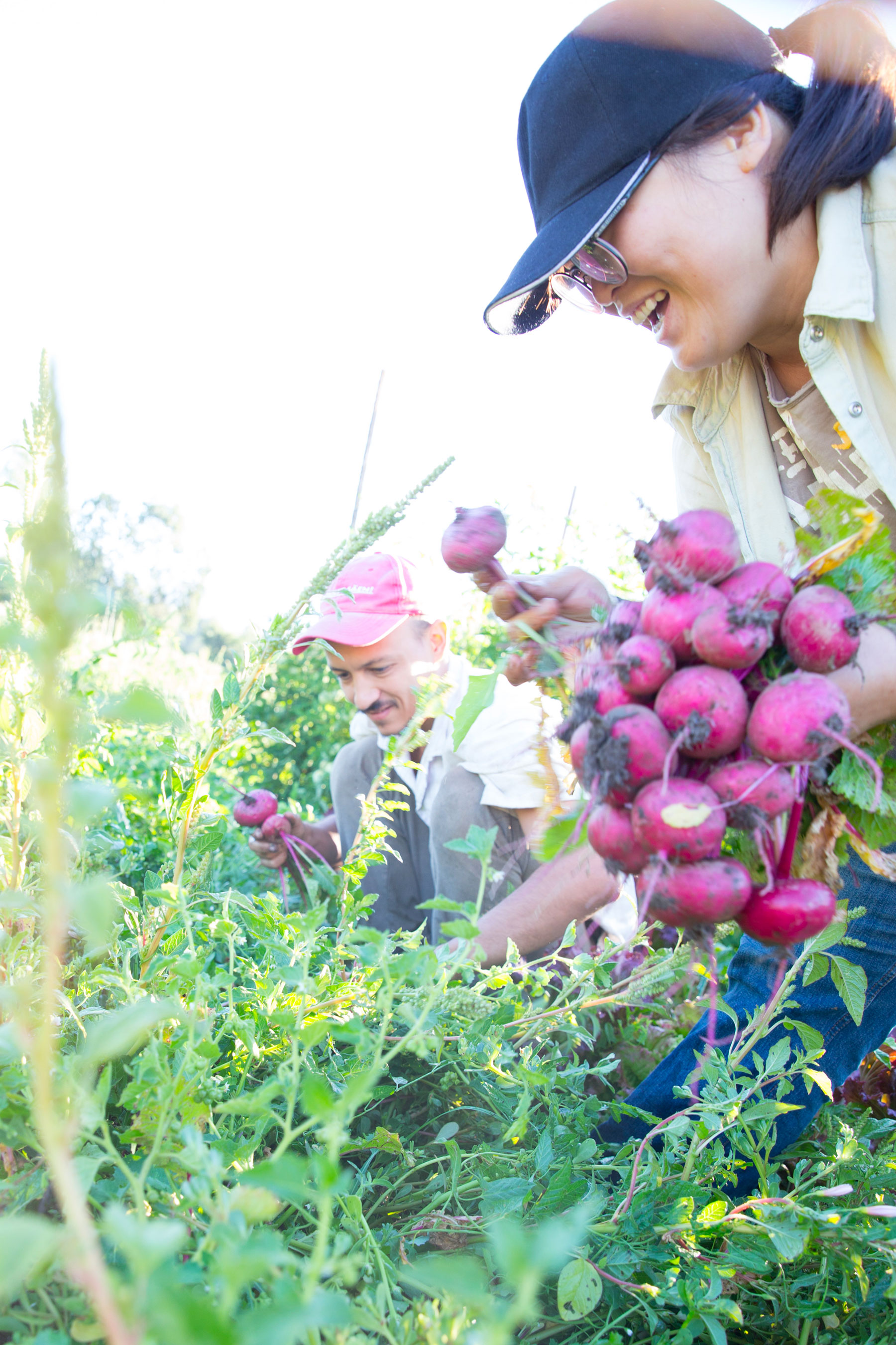 Live Power Farm interns Mei Lee Ling and Pedro Paco harvest beets in diversely planted rows.
