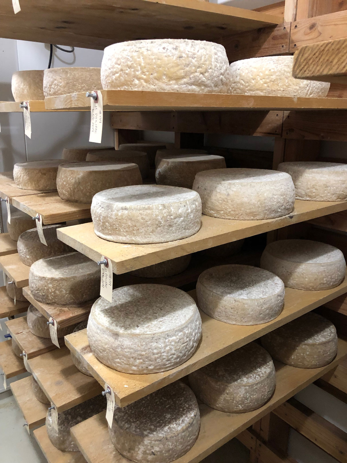 Pazzo Marco cheese aging on shelves