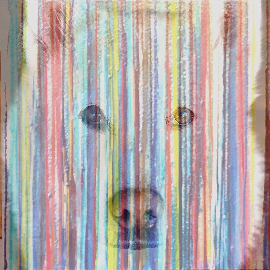 Portrait of a Wolfdog