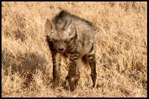 El Karama wildlife.jpg