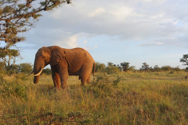 el-karama-laikipia-kenya-photographed-by-susan-wong-2013-11.jpg