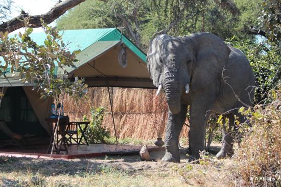 mdonya-old-river-camp.jpg