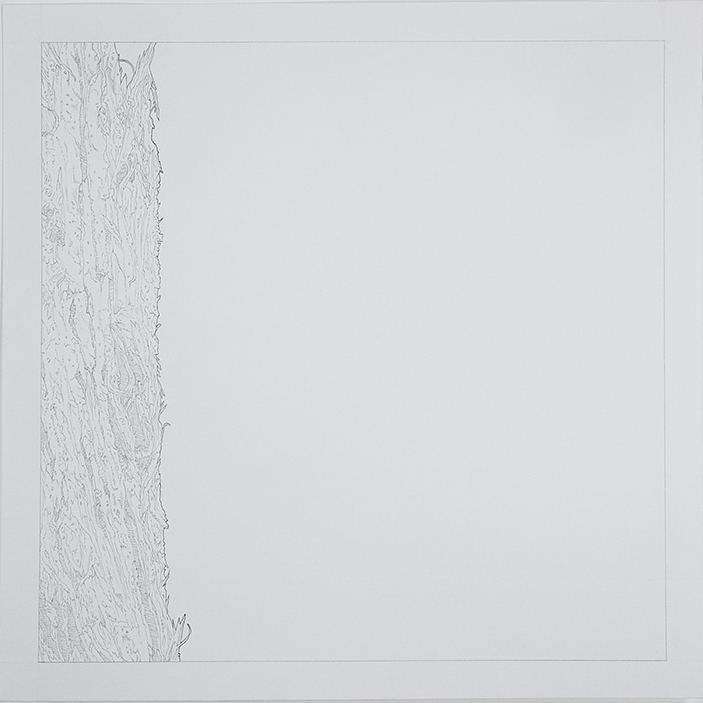 Bark , 2015 [private collection NY, NY] Graphite on Paper 9 x 9 in.