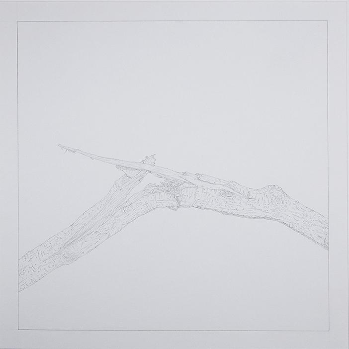 Splinter  , 2015 [private collection NY, NY]   Graphite on Paper   9 x 9 in.