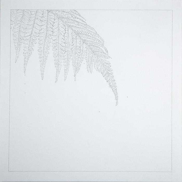 Fern  , 2015   Graphite on Paper   9 x 9in.