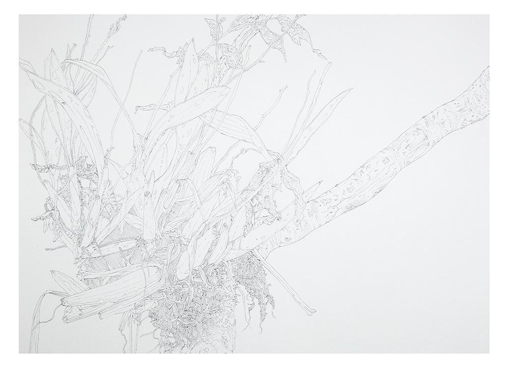 Epiphyte detail 1