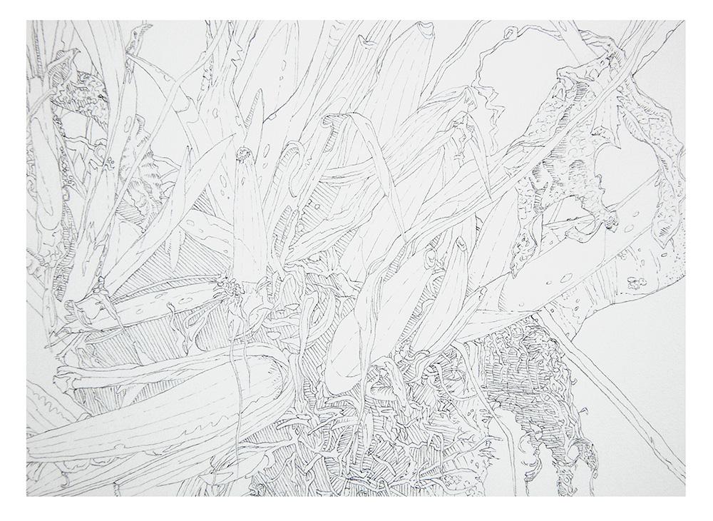 Epiphyte detail 2