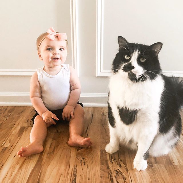 These two 😍 Stark loves Cadence but keeps his distance. She doesn't really know not to grab his fur, but when he lets her pet him...her face just lights up! It's seriously one of the small daily joys of motherhood ❤️