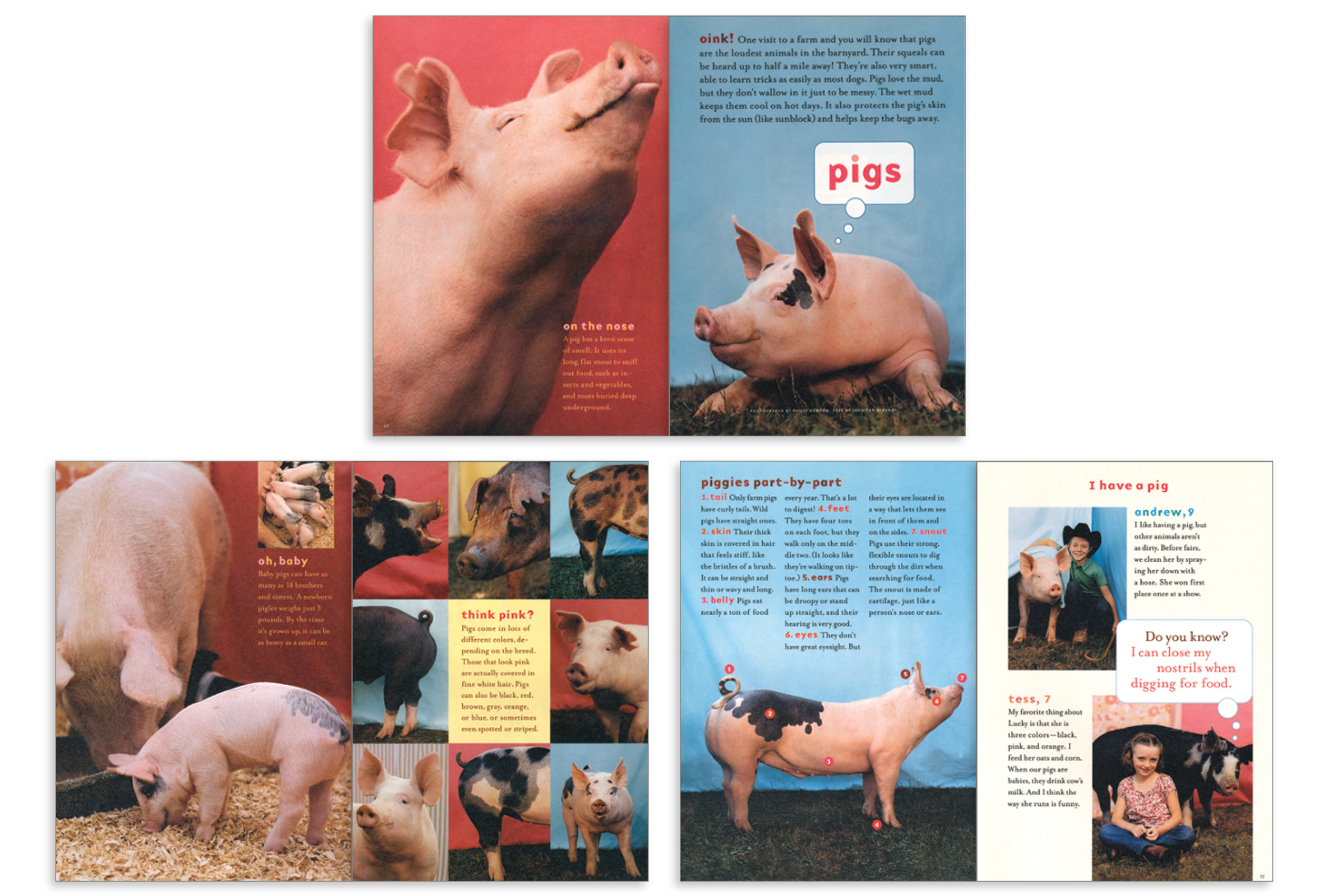 How Now: Pigs