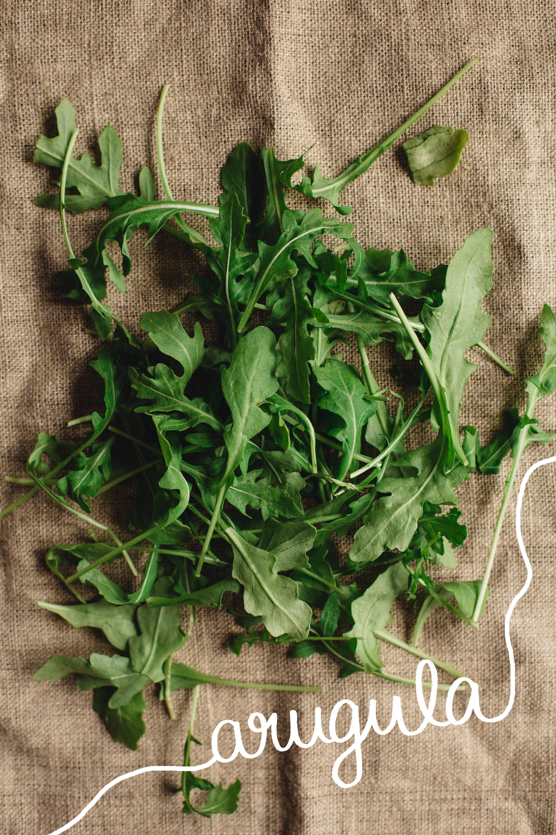 FOODSTUFF_GUIDE-TO-GREENS_ARUGULA_White.jpg