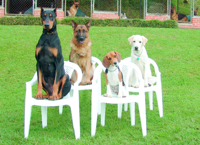 Well-Trained-Dogs.jpg