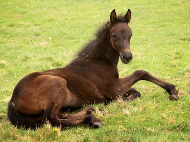 laying horse.jpg