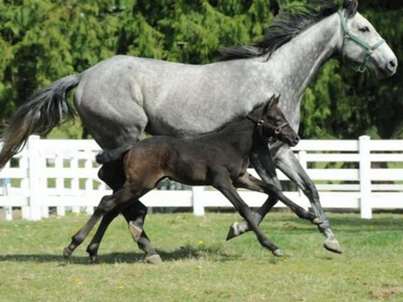running horses.jpg