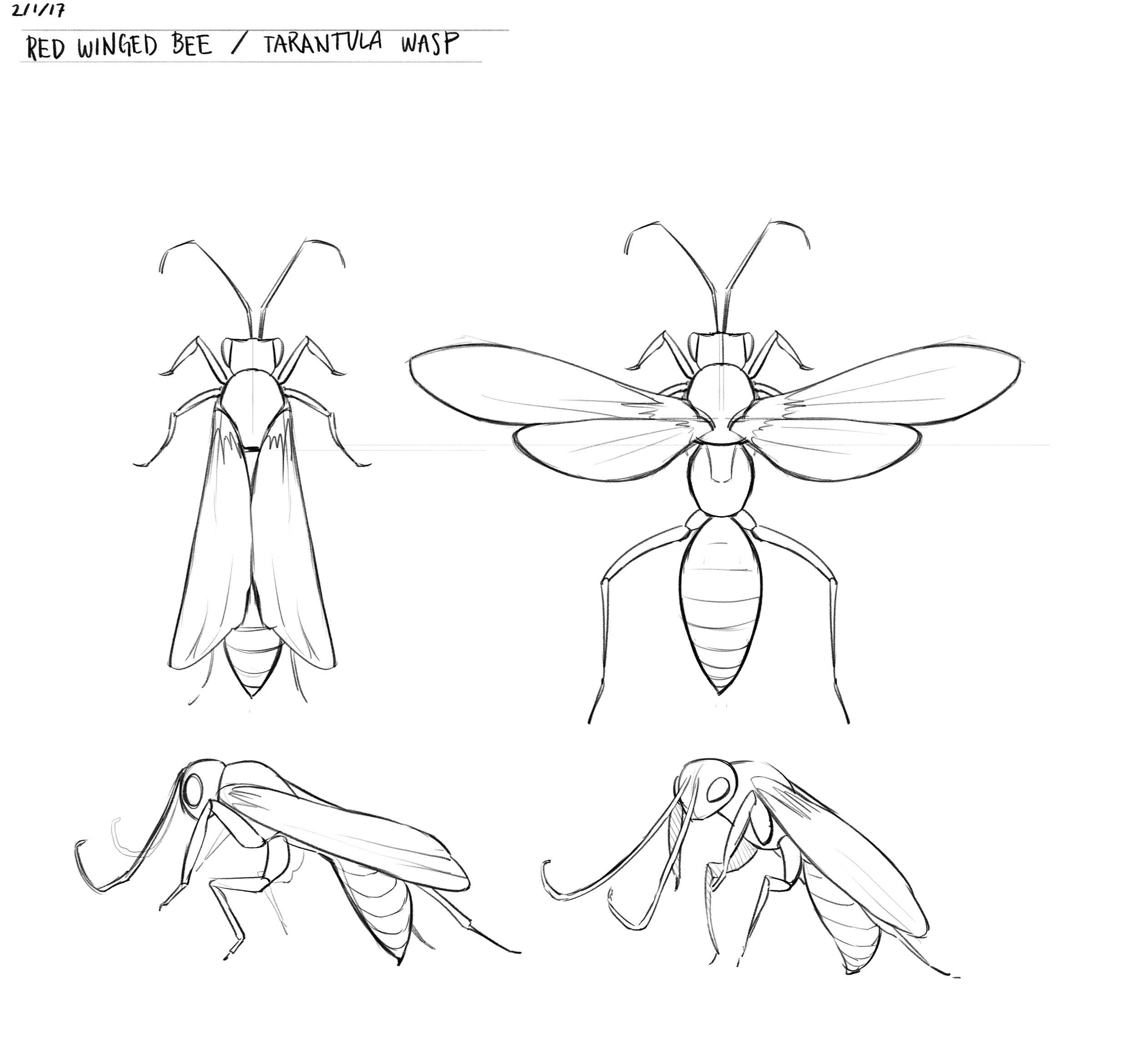 tarantula wasp.jpg