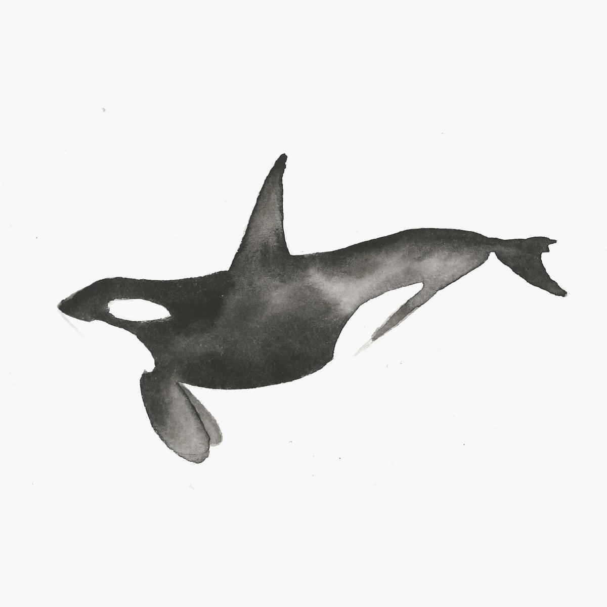 orca-thumb3.png
