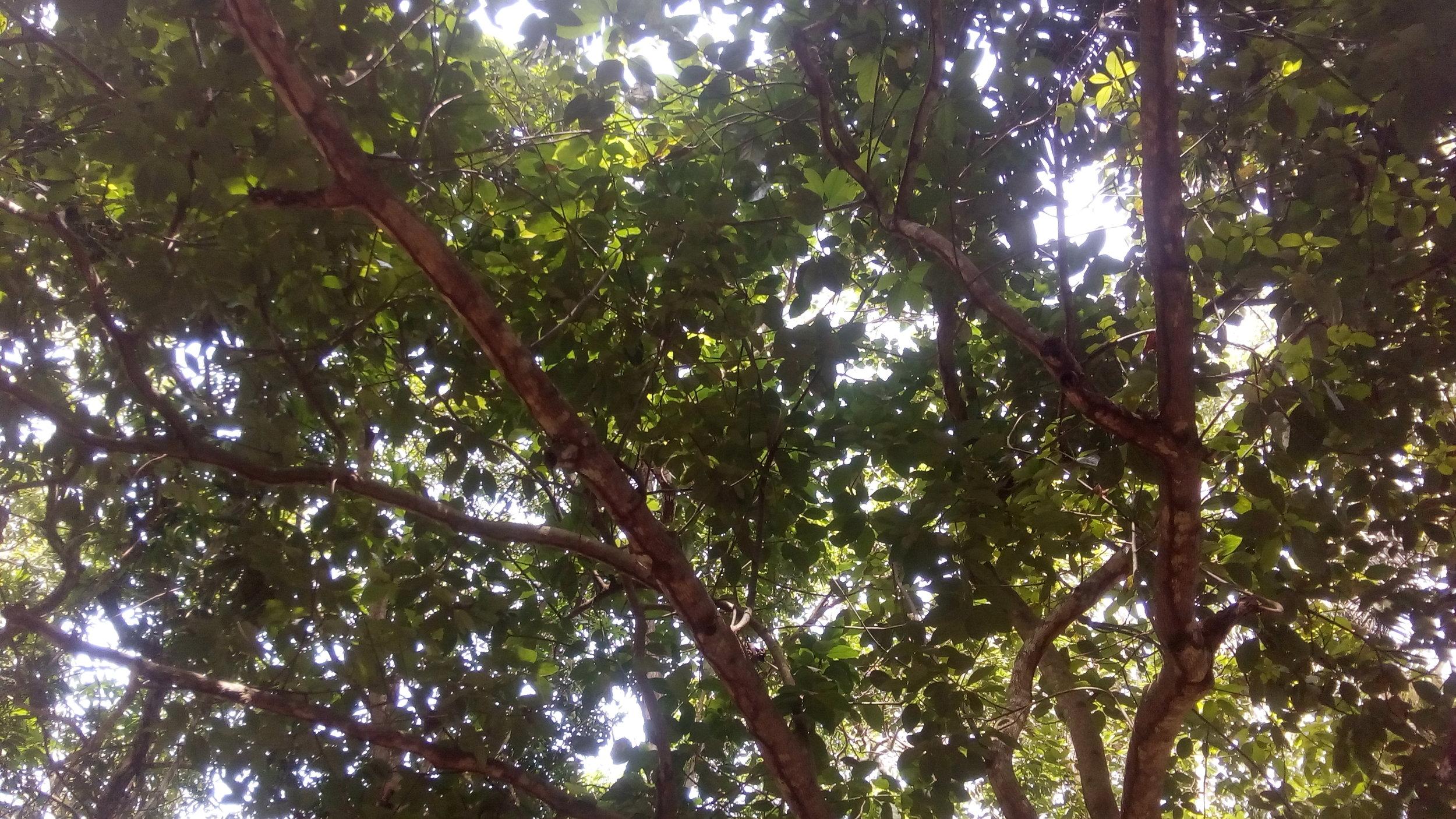 Sunlight enters the canopy at the Jardin Botanique in Bingerville,Côte d'Ivoire