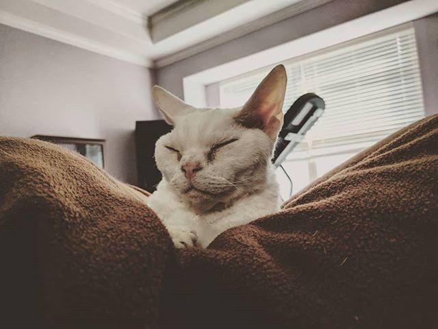 The face of a happy cat. #catsofinstagram #devonrex
