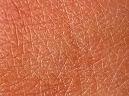 skin texture.jpg