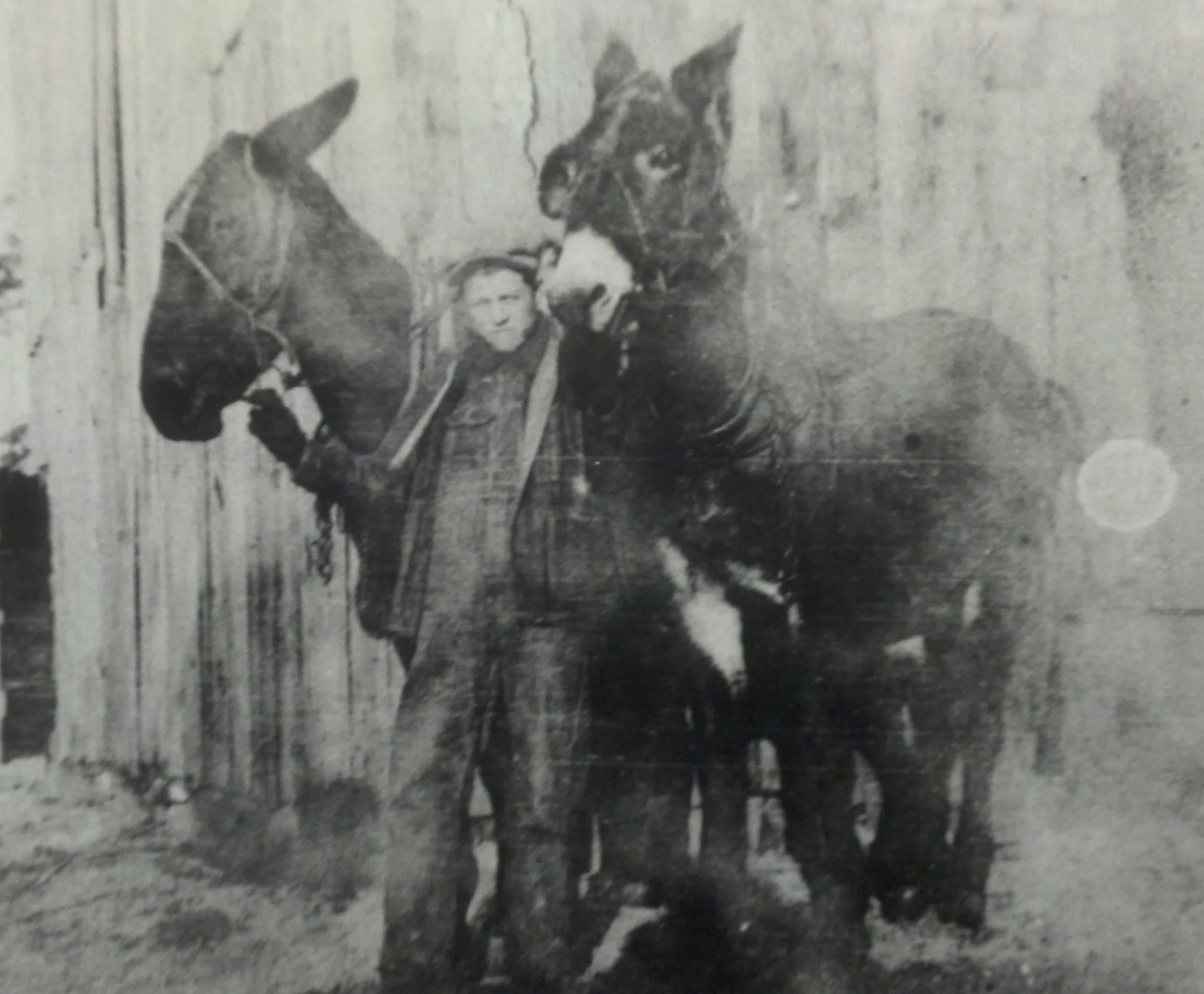 Elbert Hall with his own mules.  He is about 16 years old and had bought them himself. Picture courtesy of Terry Hall.
