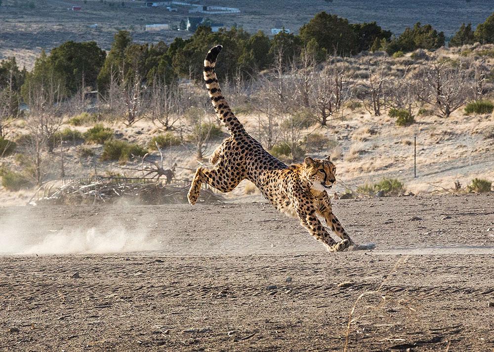 164OutofAfrica12_.jpg