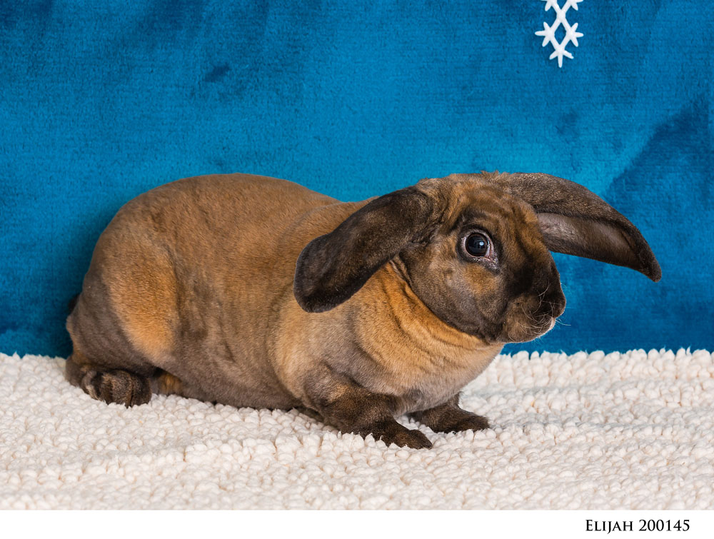 Adoptable Pets at Nevada Humane Society