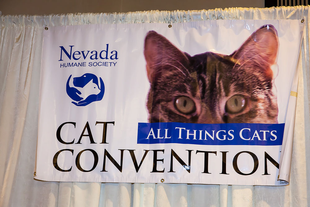 Cat Convention