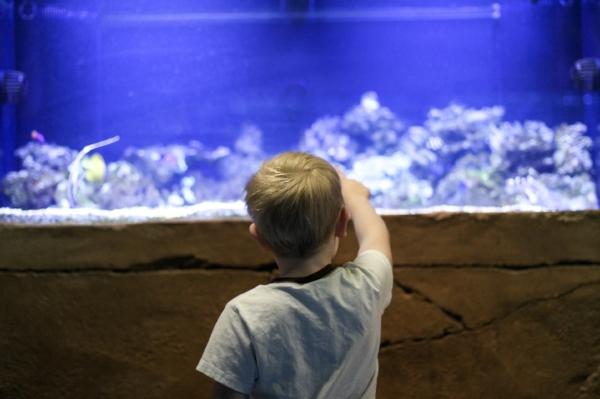 seaquest_aquarium.JPG