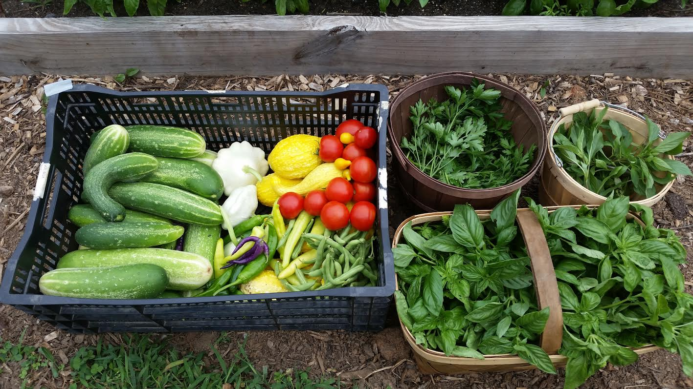 Colorful harvest.jpg