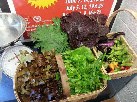 Lettuce harvest.jpg