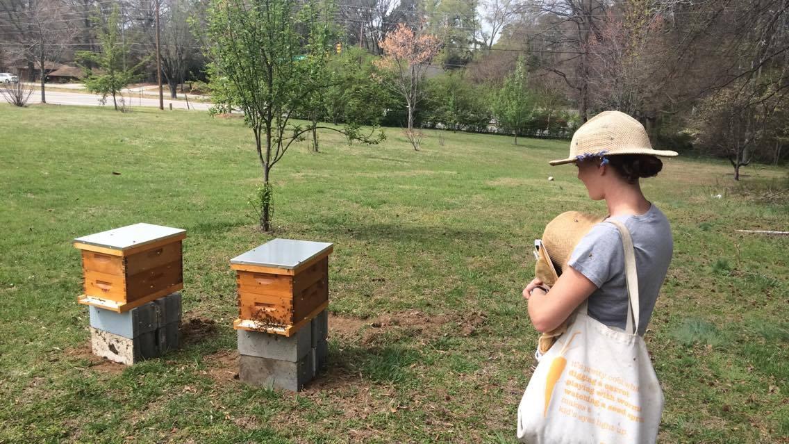 bees 2.jpg