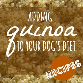 can dogs have quinoa
