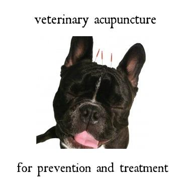 photo source: ancientartsacupuncture.com