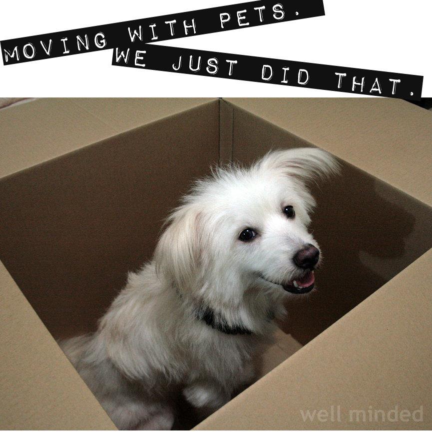 dog image source: forbes.com