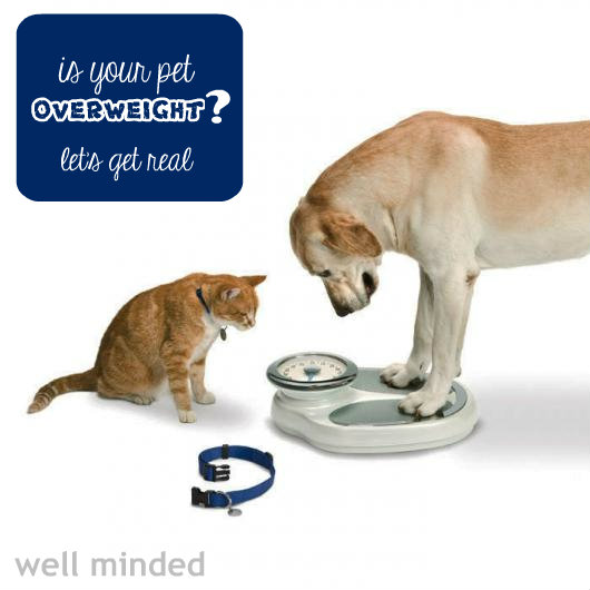 is your pet overweight? let's get real #HillsPet #giveaway #sponsored pet photo source: christinambove.com