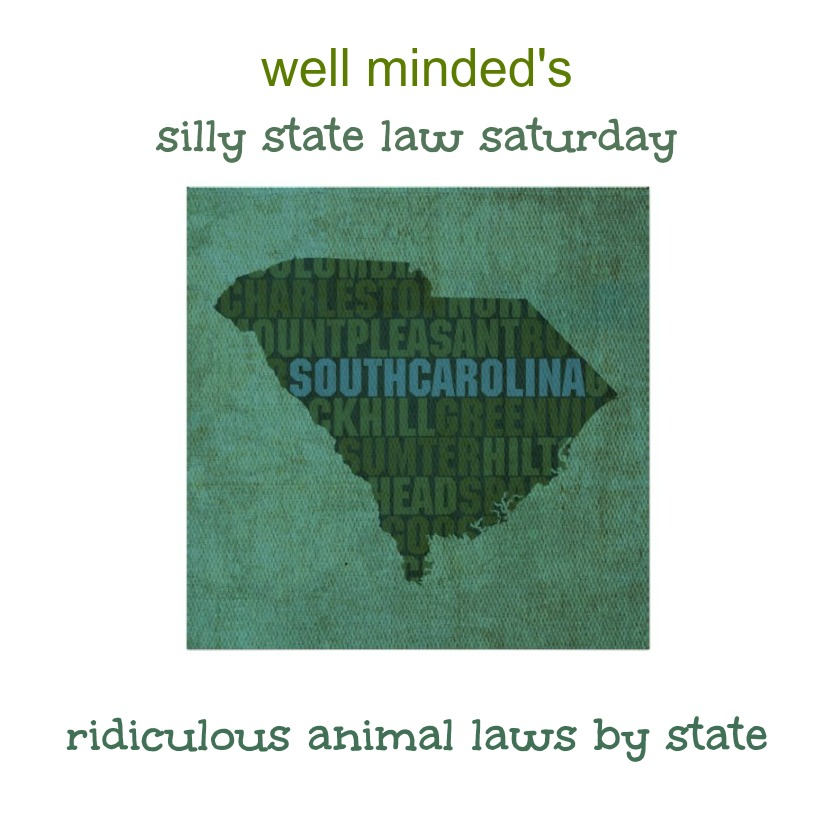 well minded's silly state law saturday: south carolina. state image source: zazzle.com