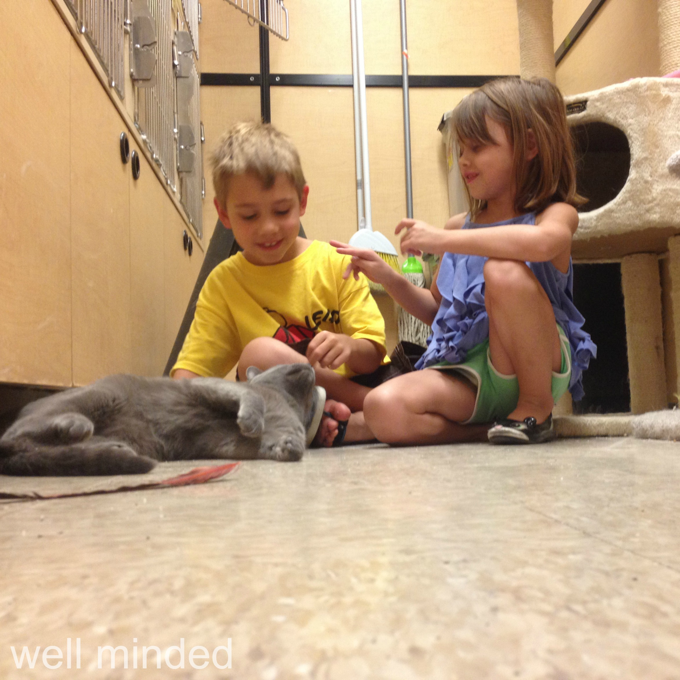 The littles playing with Seven while I scoop litter boxes.