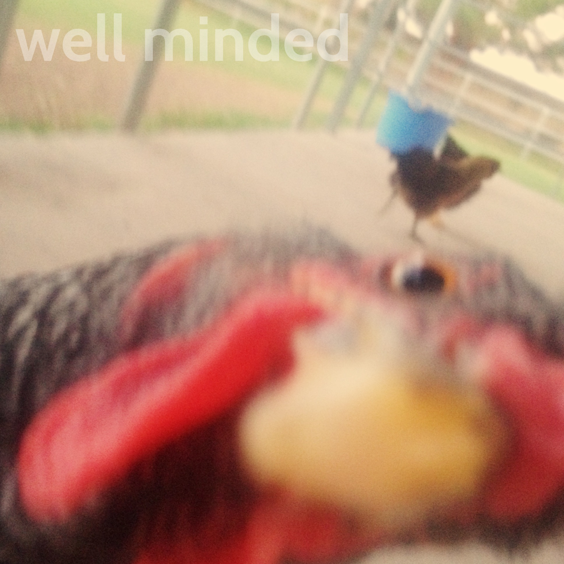 Dusty, one of my clients, is not camera shy. In fact, she was pecking my phone as I attempted to photograph her. Silly!