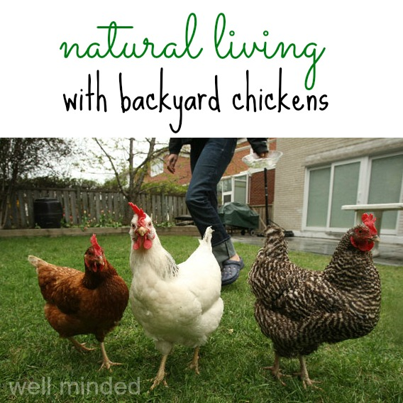 natural living with backyard chickens–well minded. chicken photo source: thehamtramckreview.com