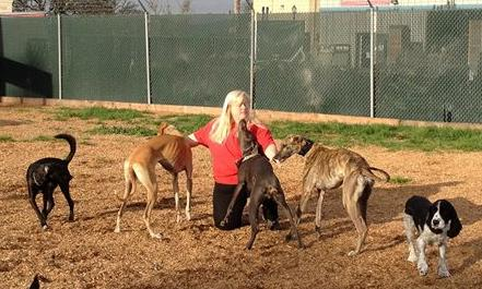 Colleen Combs and part of her pack. Photo courtesy of GDRP.