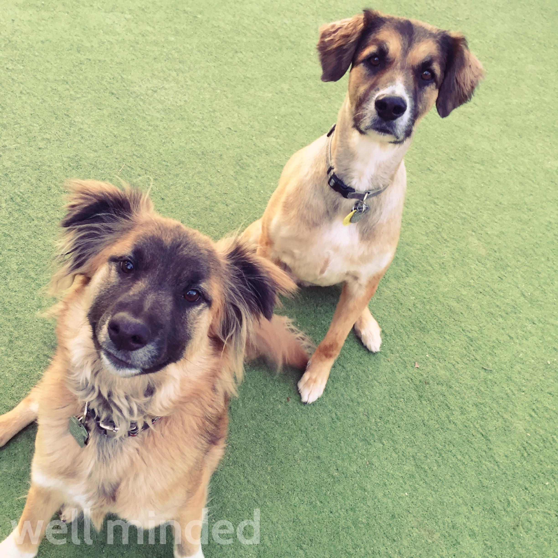 Find a dog-friendly beach or park.