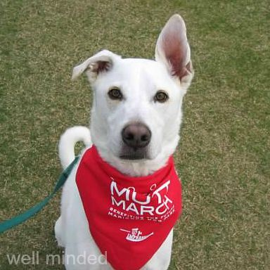 Clayton, circa 2007, at the Maricopa Mutt March, a community event I co-founded.