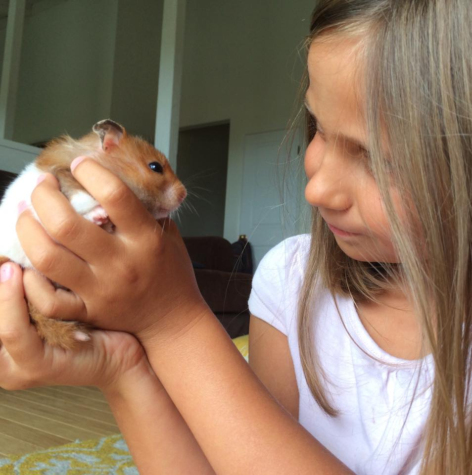 As with any pet, there are pros and cons to having a hamster.