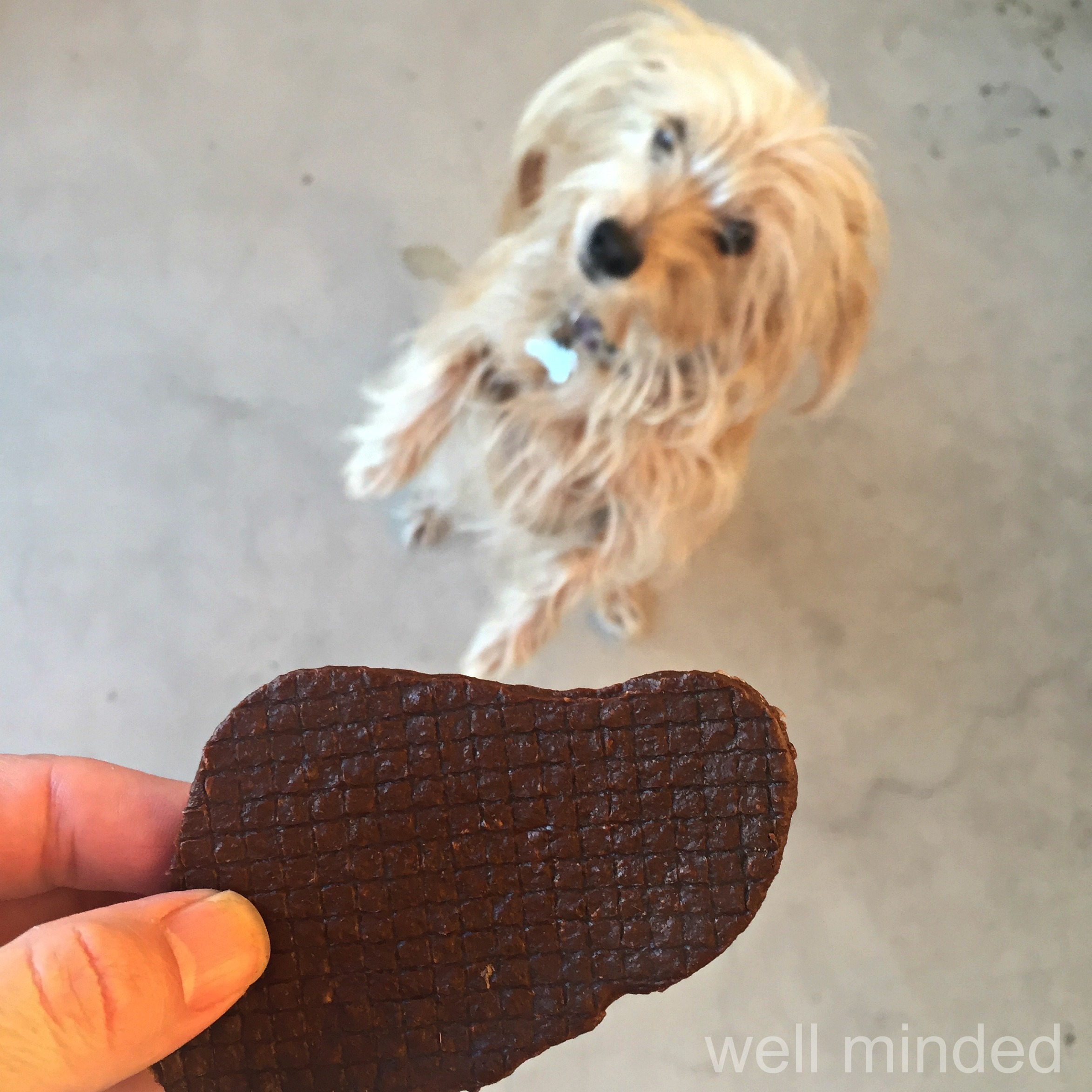 """N.A.S.H.A. eagerly shows off """"up"""" without being asked. This is a whole treat, but they are easily broken apart for smaller dogs like ours."""