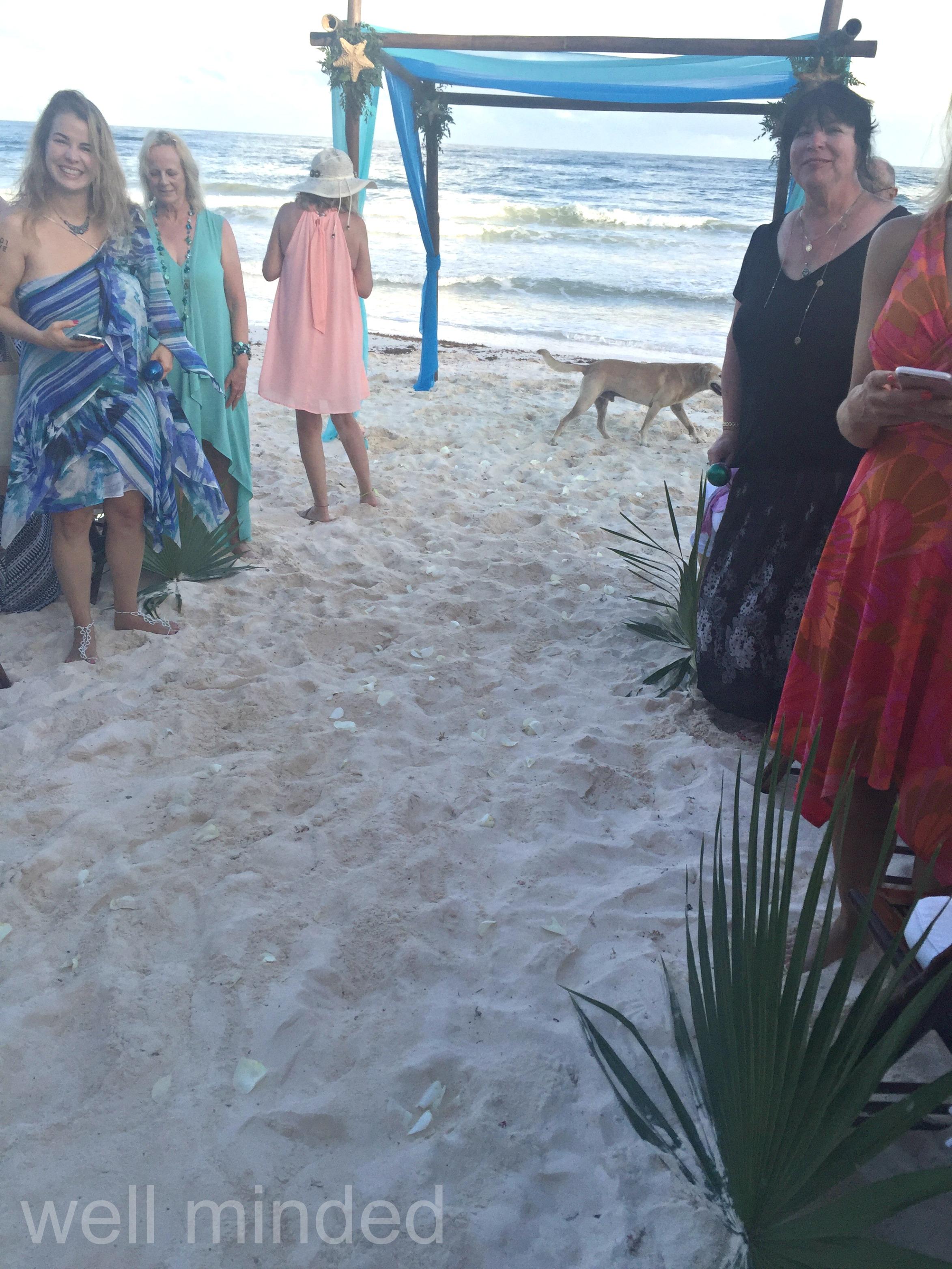 Dog_crashes_beach_wedding_Tulum.jpg