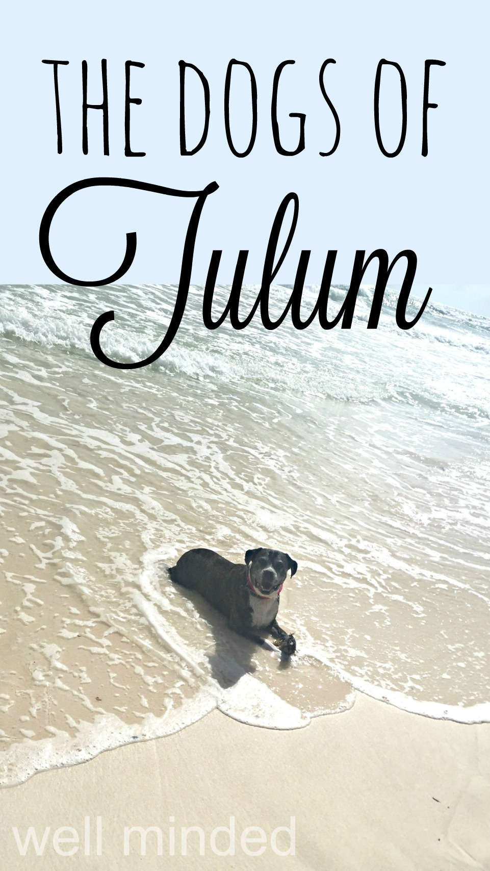 The Dogs of Tulum–Well Minded