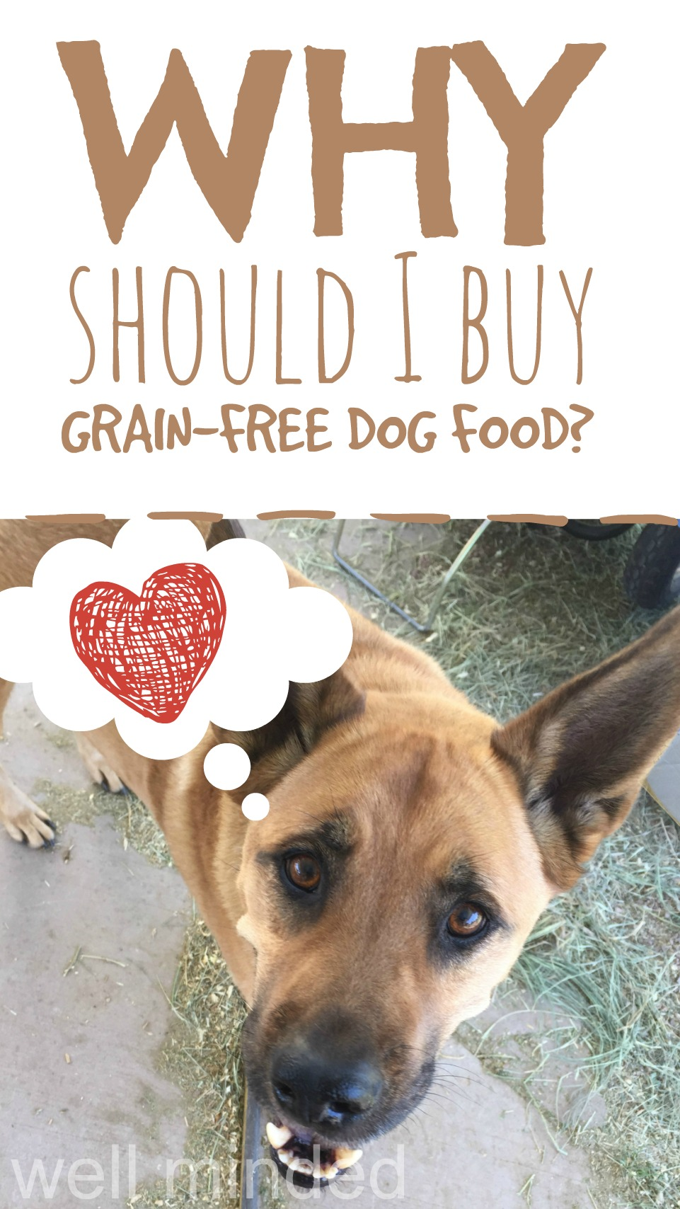 Why should I buy grain-free dog food?–Well Minded