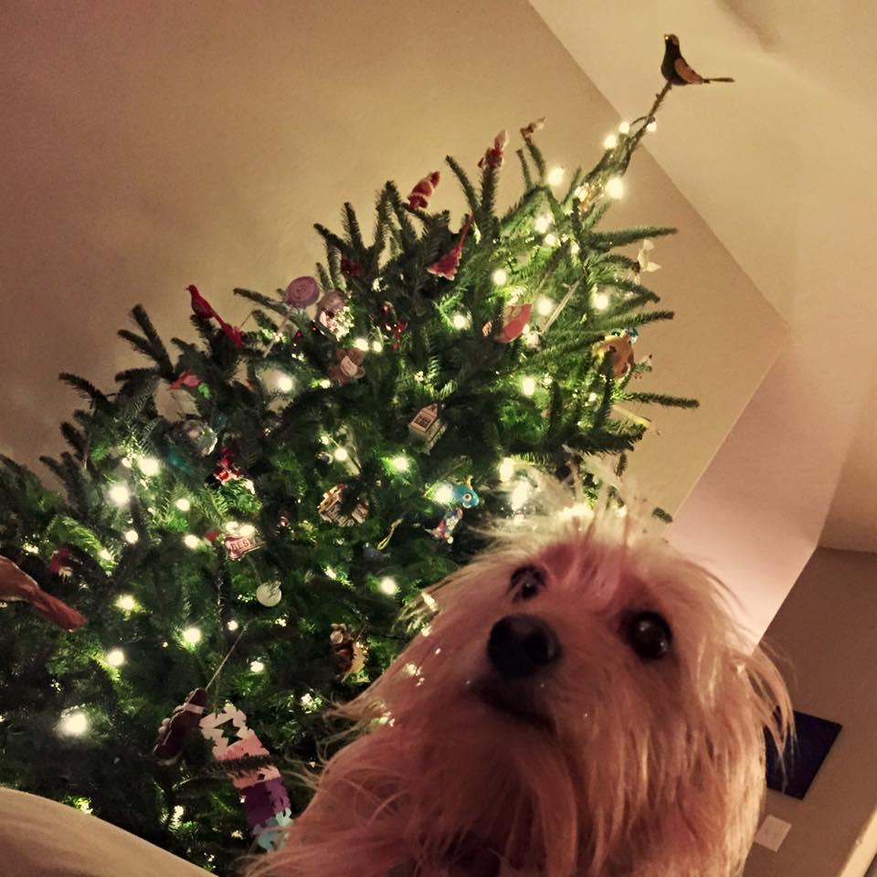 Top 10 Reasons Dogs Don't Bark at Santa, According to My Kids