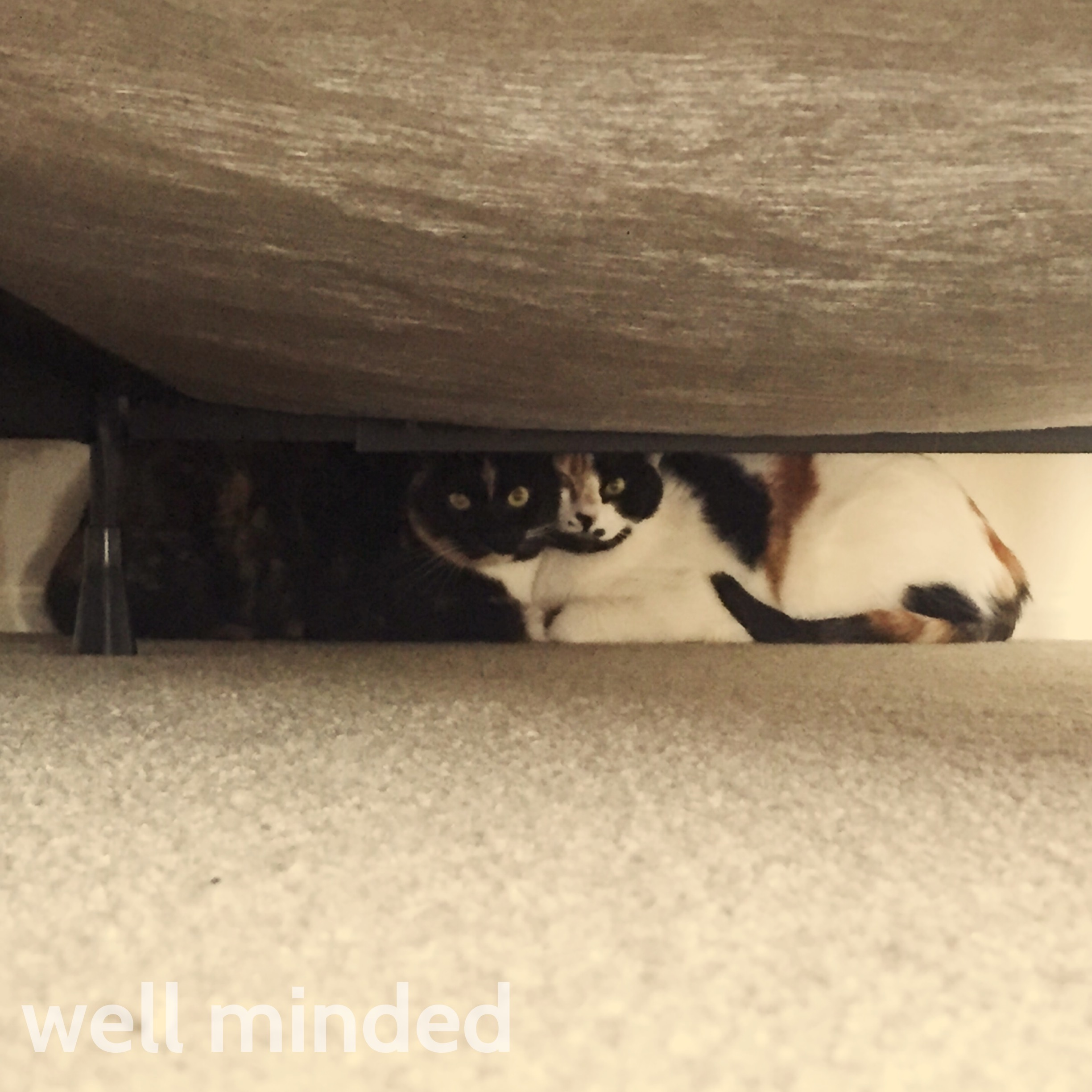 Cats who like to hide may sneak into an off-limits room if the door is opened.