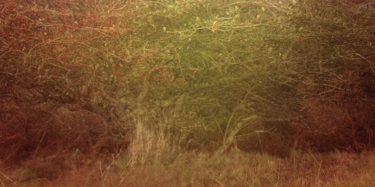 fairy tree.jpeg